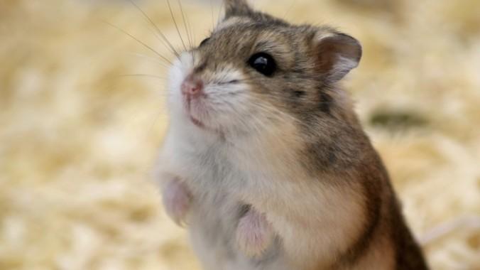 OM in hoger beroep tegen vrijspraak hamstergriller